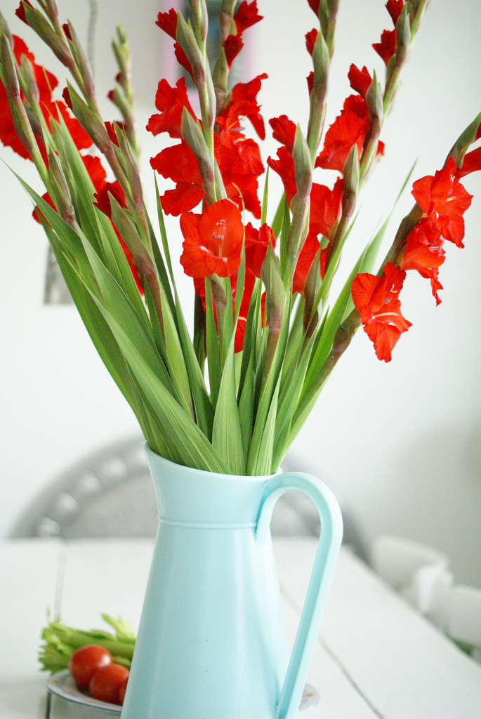 red flowers in a row